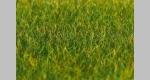 Gras / Grasfasern