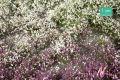 1:45 Blütenbüschel Frühherbst, ca. 42x15 cm