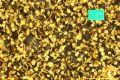 Ahornlaub gelb, Spätherbst, ca. 27x16cm