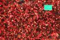 Ahornlaub rot, Späthherbst, ca. 27x16cm